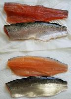 Click image for larger version.  Name:Kokes_Trout_red.jpg Views:170 Size:68.9 KB ID:9532